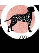Bella's Dog Boutique
